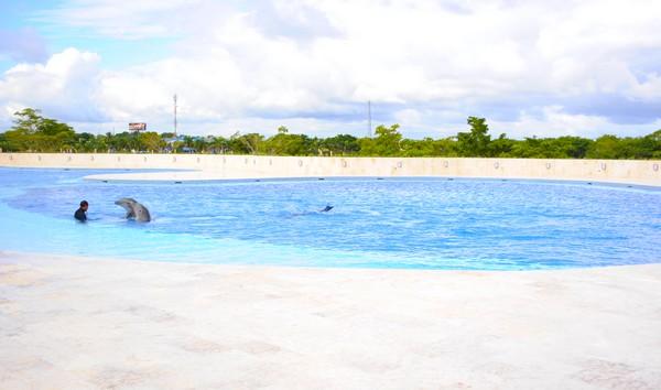 Punta Cana: Dolphin Discovery, un modelo vanguardista construido en tiempo record.