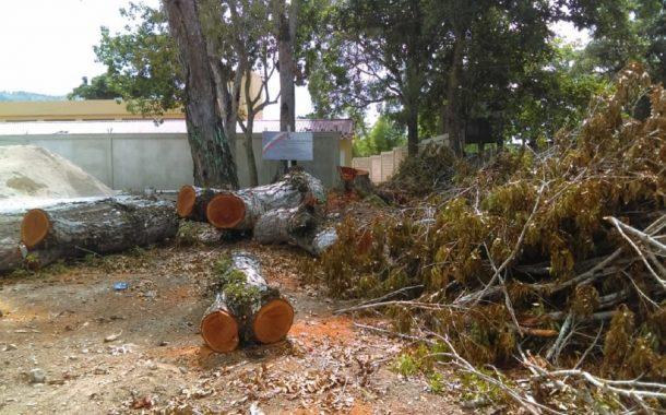 Conflicto en Higüey entre ingeniero y residentes de Los Cerritos por tala de árboles.
