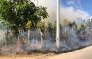 Hato de Mana: Incendio afecta una zona ganadera en Higüey.